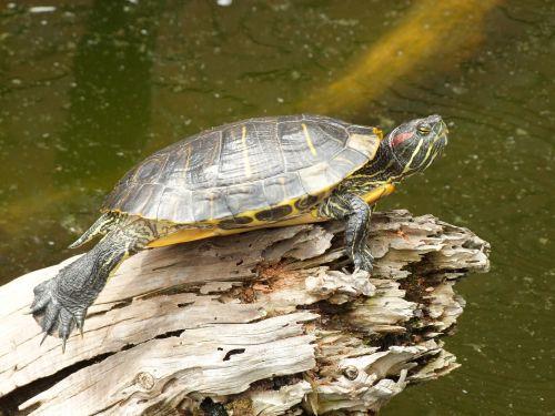 Ces reptiles et amphibiens venus d'ailleurs