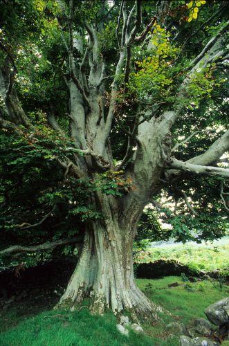 Les arbres et les fôrets avec Ernst Zürcher