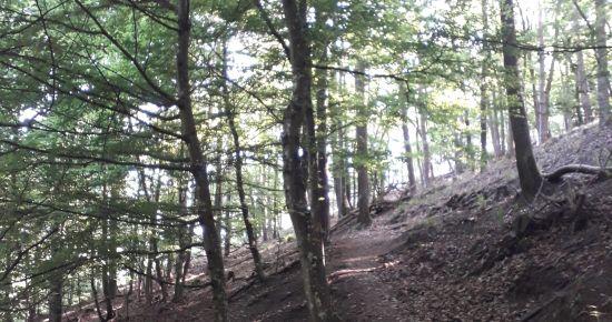 Forêt, conte-moi tes mystères