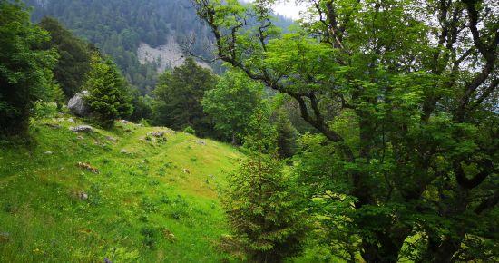 La flore automnale du massif du Wurzelstein / Haut-Fourneau
