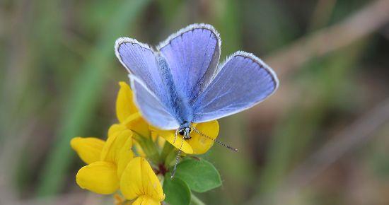 Lumière sur les papillons du massif vosgien